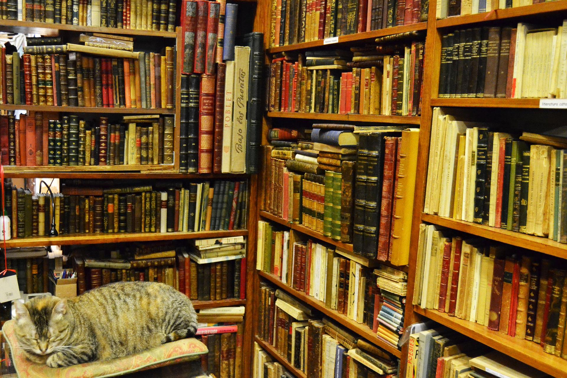"""古い洋書が収められた古書店の書棚"""""""