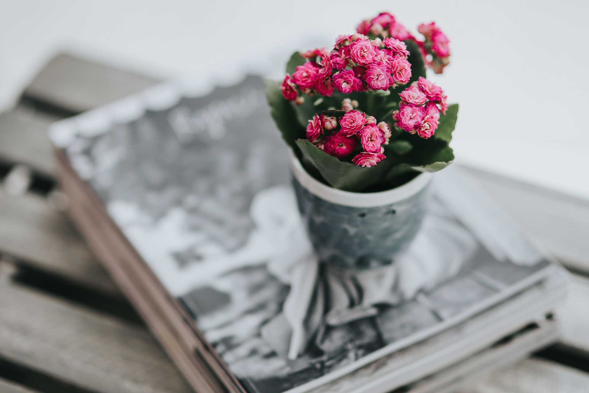海外雑誌を積み上げて作った観葉植物の台